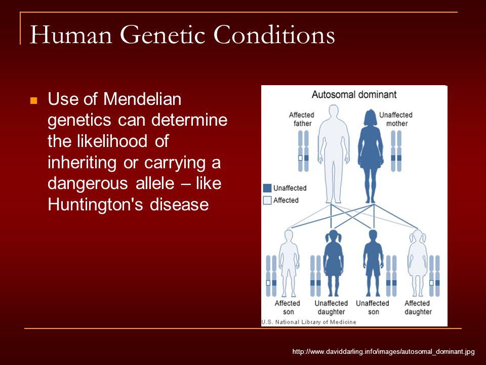Human Genetic Conditions Use of Mendelian genetics can determine the likelihood of inheriting or carrying a dangerous allele – like Huntington's disea