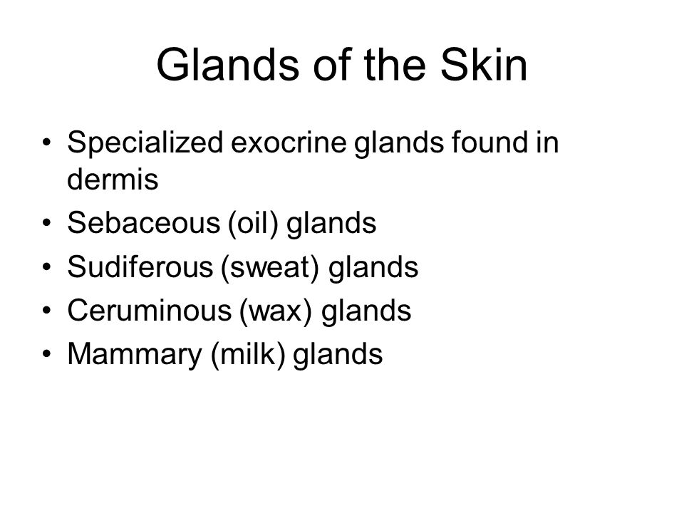 Glands of the Skin Specialized exocrine glands found in dermis Sebaceous (oil) glands Sudiferous (sweat) glands Ceruminous (wax) glands Mammary (milk) glands