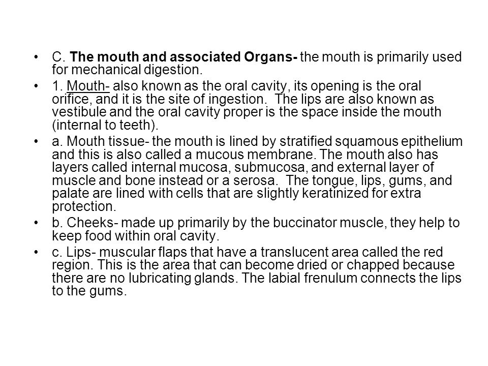 C.The mouth and associated Organs- the mouth is primarily used for mechanical digestion.