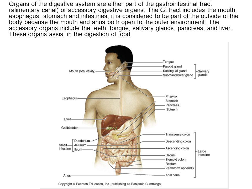 Organs of the digestive system are either part of the gastrointestinal tract (alimentary canal) or accessory digestive organs.