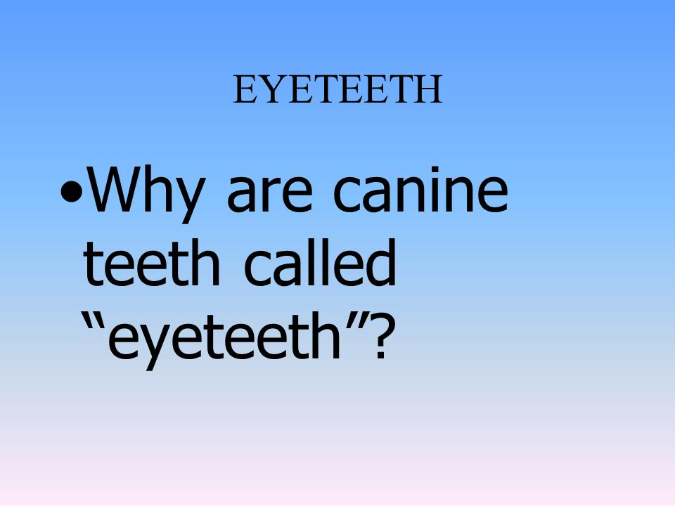 Dentine- is extremely sensitive yellowish portion surrounding the pulp cavity. (bulk end of tooth) Enamel-is the insensitive white covering of the cro