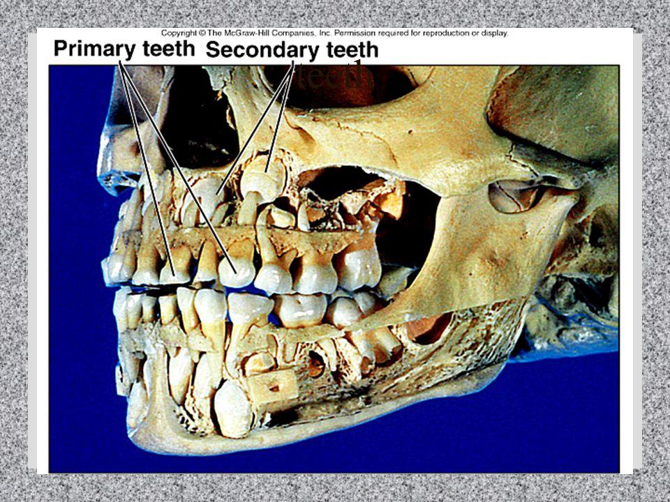15 - 5 teeth