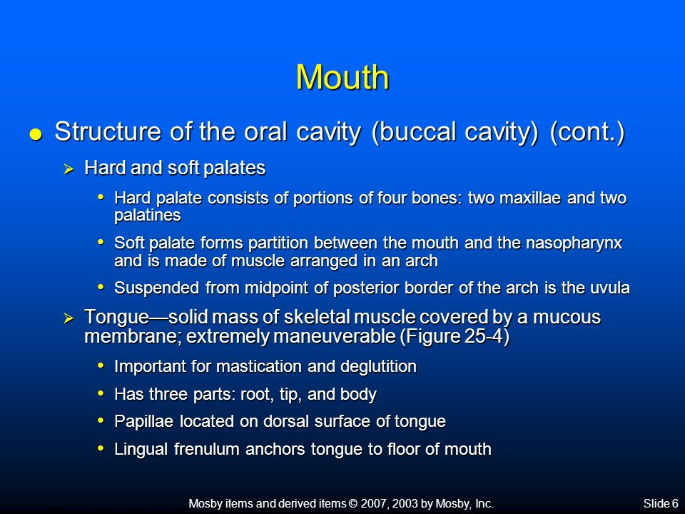 Mosby items and derived items © 2007, 2003 by Mosby, Inc.Slide 6 Mouth  Structure of the oral cavity (buccal cavity) (cont.)  Hard and soft palates Hard palate consists of portions of four bones: two maxillae and two palatines Hard palate consists of portions of four bones: two maxillae and two palatines Soft palate forms partition between the mouth and the nasopharynx and is made of muscle arranged in an arch Soft palate forms partition between the mouth and the nasopharynx and is made of muscle arranged in an arch Suspended from midpoint of posterior border of the arch is the uvula Suspended from midpoint of posterior border of the arch is the uvula  Tongue—solid mass of skeletal muscle covered by a mucous membrane; extremely maneuverable (Figure 25-4) Important for mastication and deglutition Important for mastication and deglutition Has three parts: root, tip, and body Has three parts: root, tip, and body Papillae located on dorsal surface of tongue Papillae located on dorsal surface of tongue Lingual frenulum anchors tongue to floor of mouth Lingual frenulum anchors tongue to floor of mouth