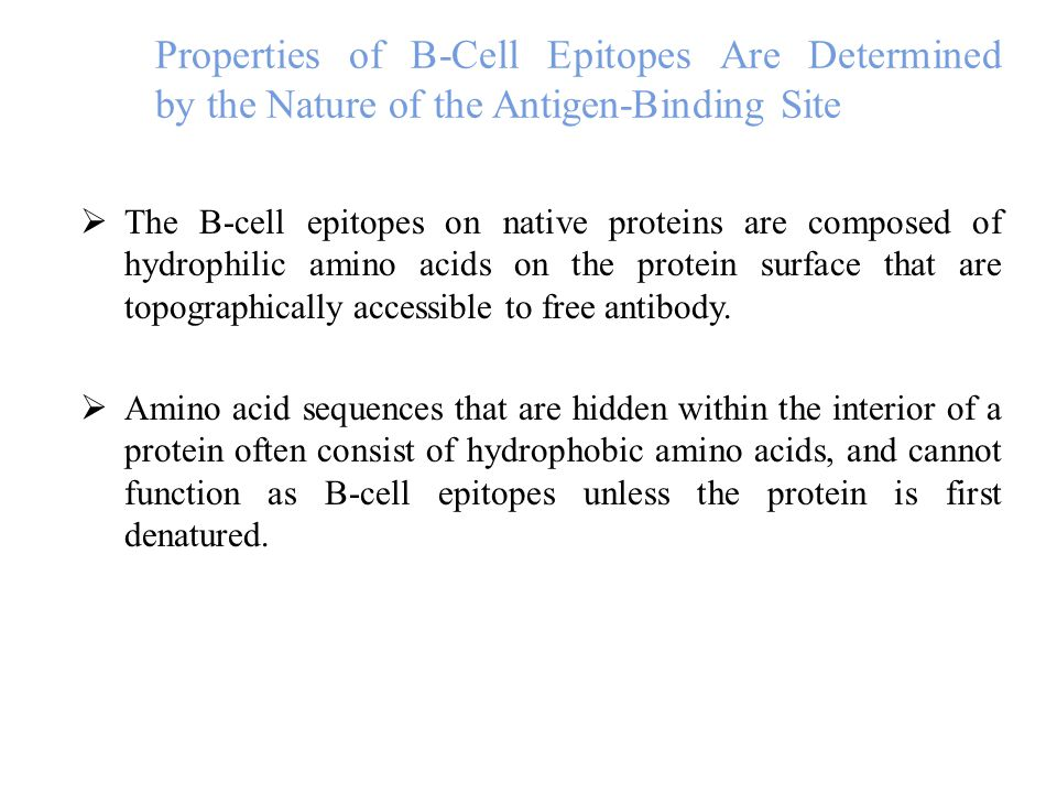 Properties of B-Cell Epitopes Are Determined by the Nature of the Antigen-Binding Site  The B-cell epitopes on native proteins are composed of hydrophilic amino acids on the protein surface that are topographically accessible to free antibody.
