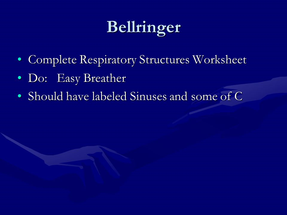 Bellringer Complete Respiratory Structures WorksheetComplete Respiratory Structures Worksheet Do: Easy BreatherDo: Easy Breather Should have labeled S