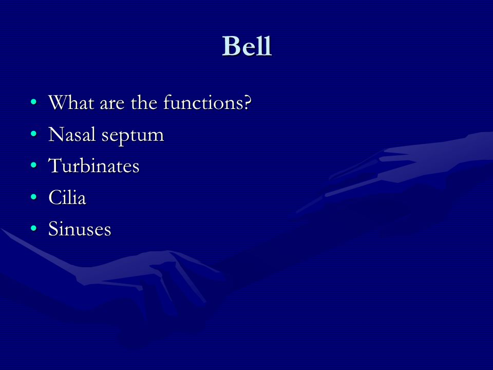 Bell What are the functions?What are the functions? Nasal septumNasal septum TurbinatesTurbinates CiliaCilia SinusesSinuses