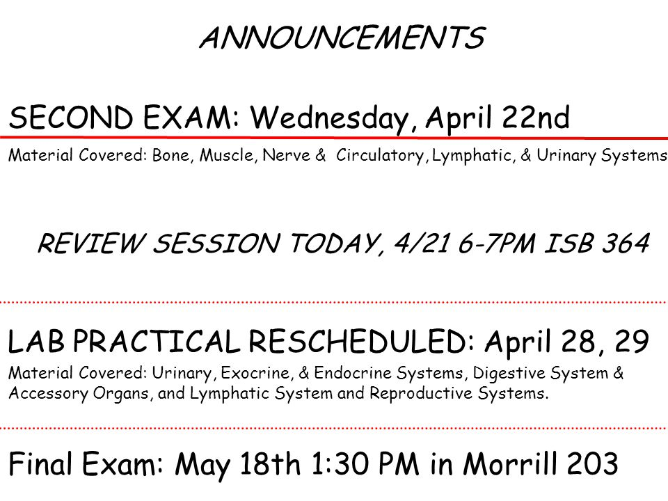 ANNOUNCEMENTS SECOND EXAM: Wednesday, April 22nd Material Covered: Bone, Muscle, Nerve & Circulatory, Lymphatic, & Urinary Systems REVIEW SESSION TODAY, 4/21 6-7PM ISB 364 LAB PRACTICAL RESCHEDULED: April 28, 29 Material Covered: Urinary, Exocrine, & Endocrine Systems, Digestive System & Accessory Organs, and Lymphatic System and Reproductive Systems.