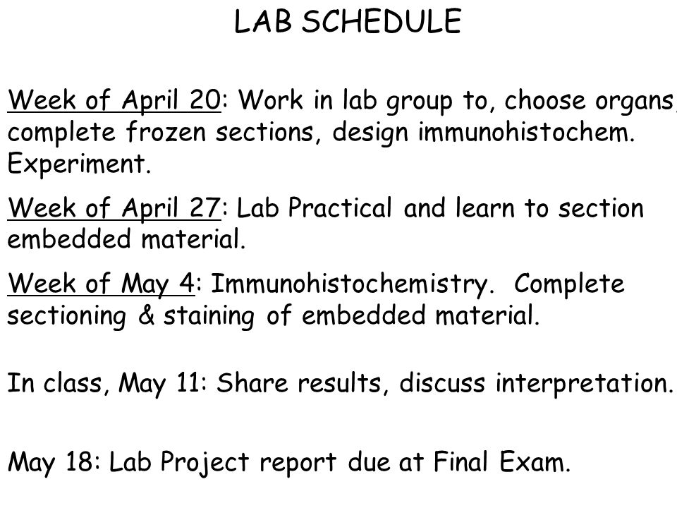 LAB SCHEDULE Week of April 20: Work in lab group to, choose organs, complete frozen sections, design immunohistochem.