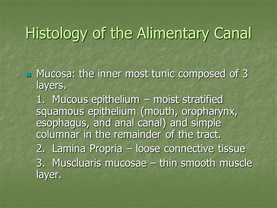 Histology of the Alimentary Canal Mucosa: the inner most tunic composed of 3 layers.