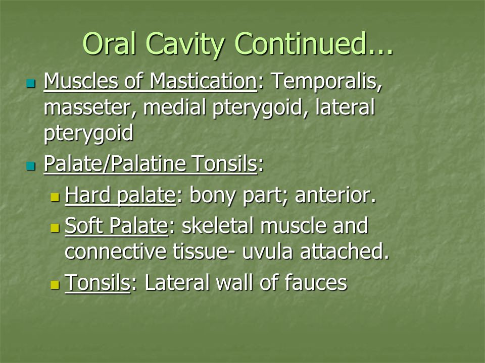 Oral Cavity Continued...