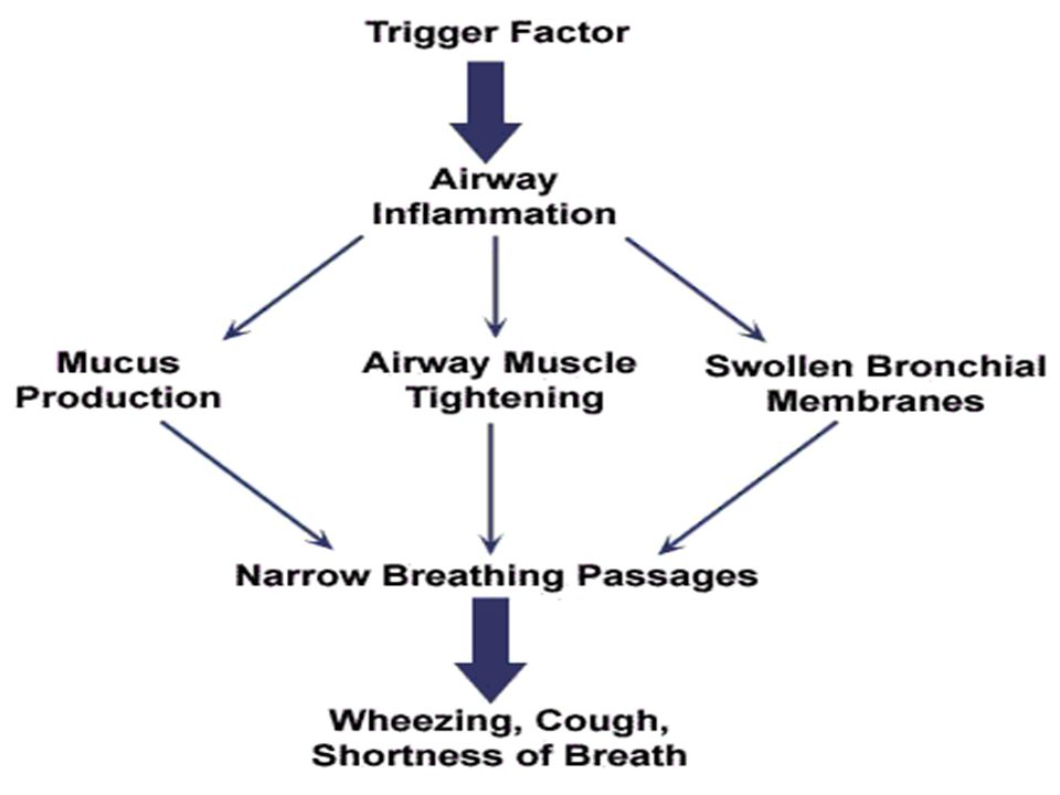 SYMPTOMS CHILLS, HIGH FEVER CHEST PAIN PRUNE COLORED SPUTUM SWEATING RAPID PULSE AND BREATHING CYANOSIS CONFUSED MENTAL STATE.