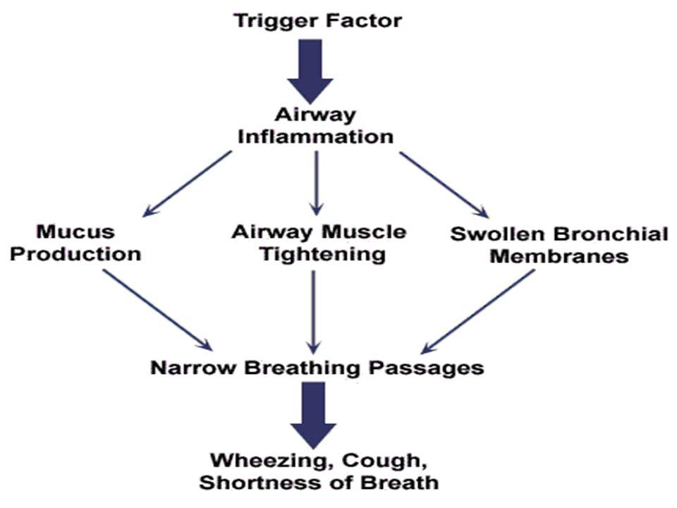 PhotoGallery emphysema