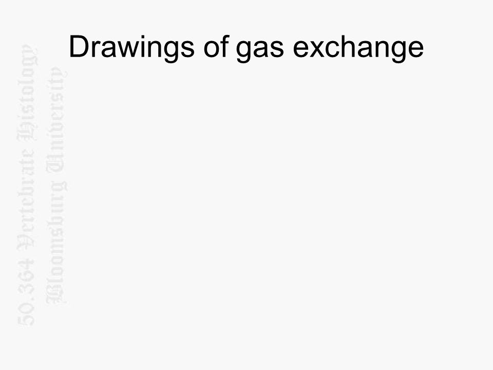 Drawings of gas exchange