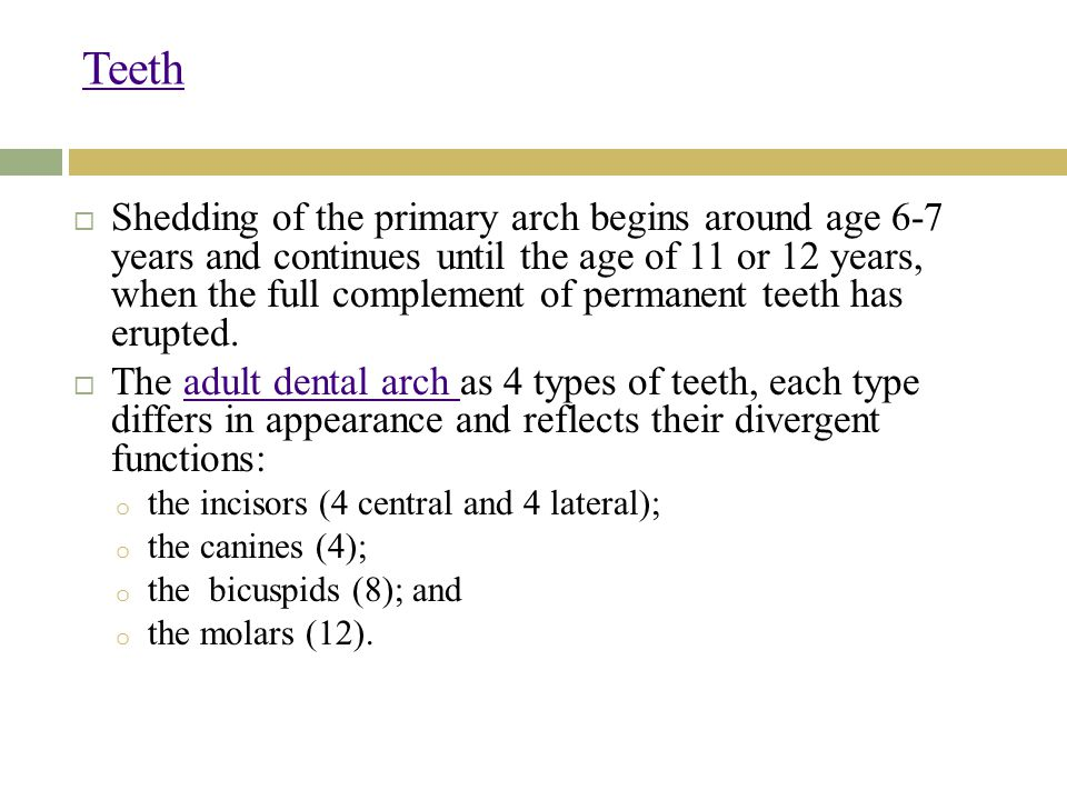 Teeth  Shedding of the primary arch begins around age 6-7 years and continues until the age of 11 or 12 years, when the full complement of permanent