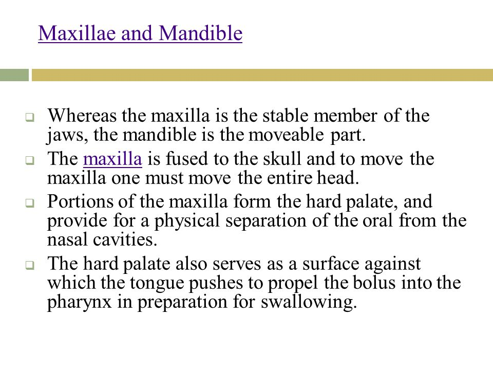 Maxillae and Mandible  Whereas the maxilla is the stable member of the jaws, the mandible is the moveable part.
