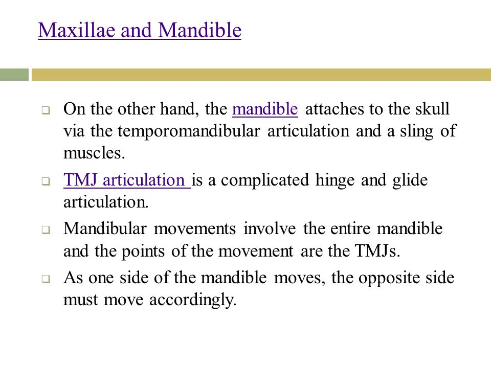 Maxillae and Mandible  On the other hand, the mandible attaches to the skull via the temporomandibular articulation and a sling of muscles.mandible  TMJ articulation is a complicated hinge and glide articulation.