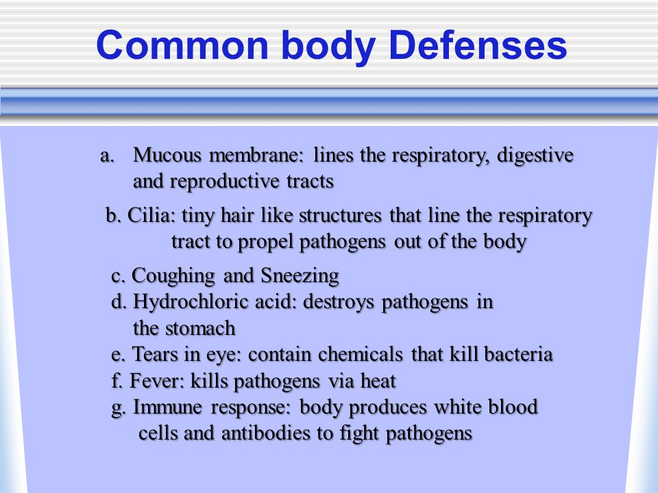 Common body Defenses a.Mucous membrane: lines the respiratory, digestive and reproductive tracts b.