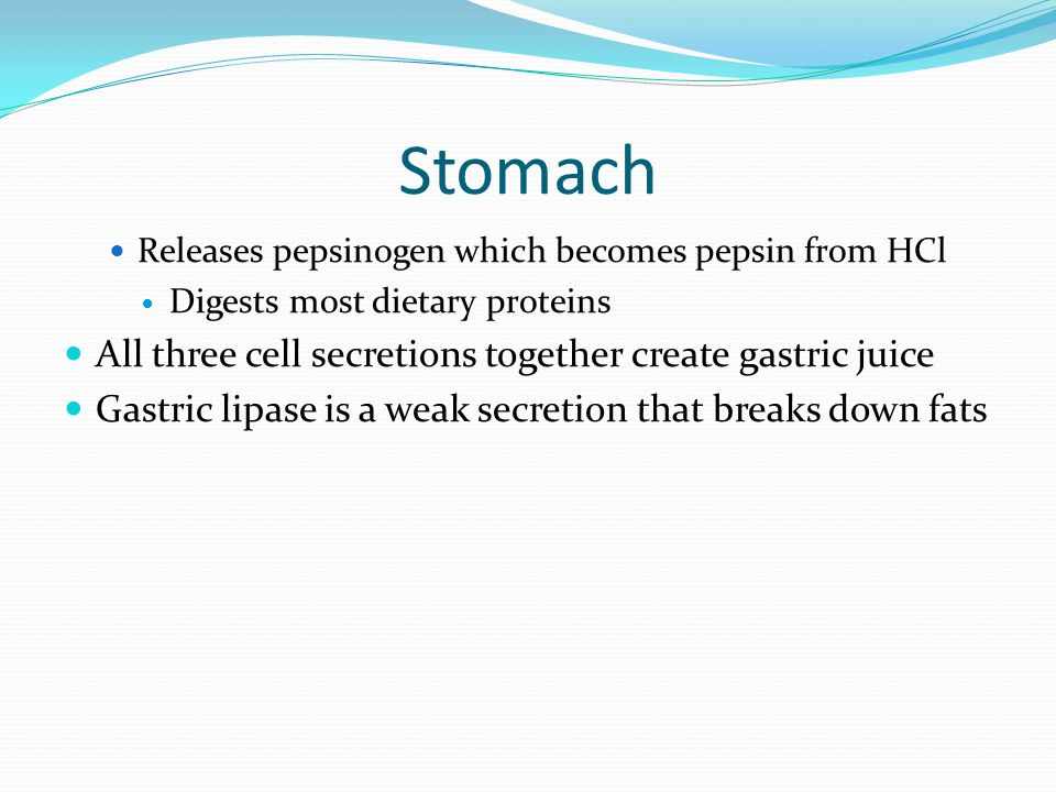 Stomach Releases pepsinogen which becomes pepsin from HCl Digests most dietary proteins All three cell secretions together create gastric juice Gastri