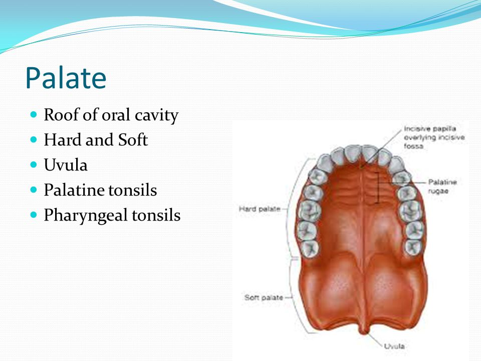 Palate Roof of oral cavity Hard and Soft Uvula Palatine tonsils Pharyngeal tonsils