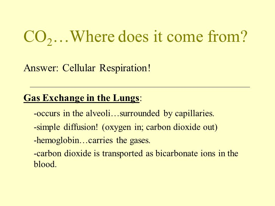 CO 2 …Where does it come from? Answer: Cellular Respiration! Gas Exchange in the Lungs: -occurs in the alveoli…surrounded by capillaries. -simple diff