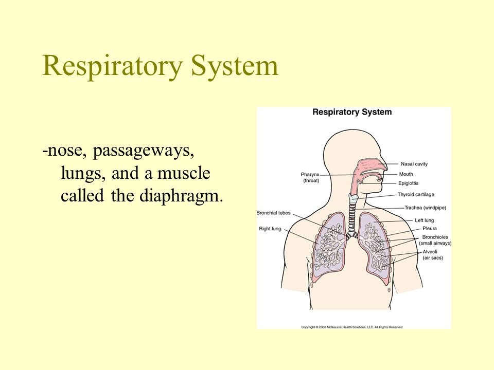 The act of breathing… -When you inhale, your rib muscles and diaphragm contract, expanding your chest cavity.