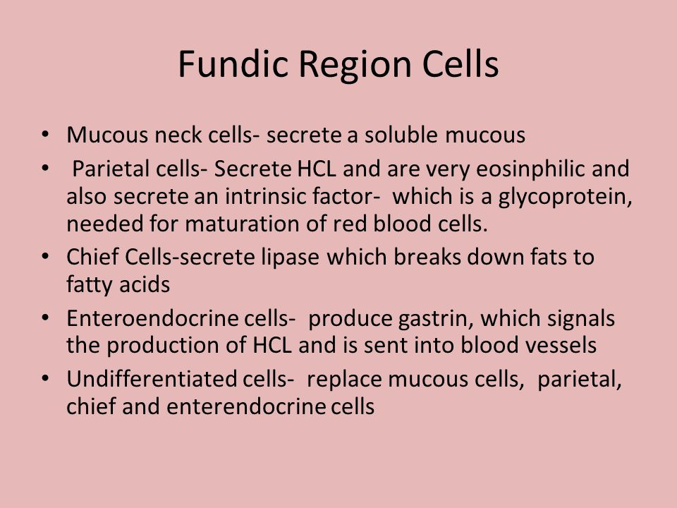 Fundic Region Cells Mucous neck cells- secrete a soluble mucous Parietal cells- Secrete HCL and are very eosinphilic and also secrete an intrinsic fac