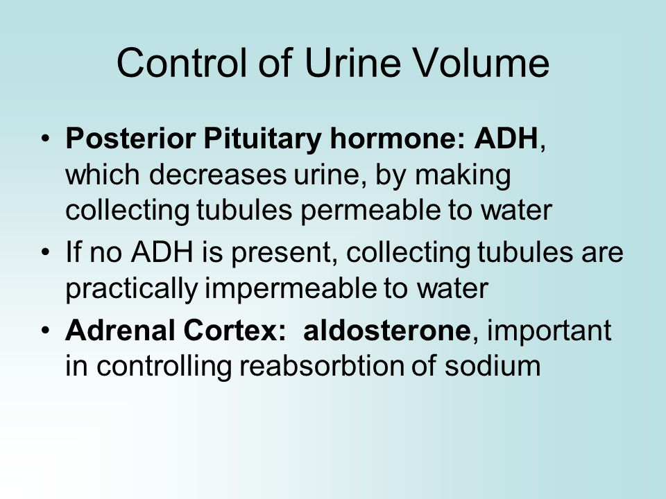 Control of Urine Volume Posterior Pituitary hormone: ADH, which decreases urine, by making collecting tubules permeable to water If no ADH is present,
