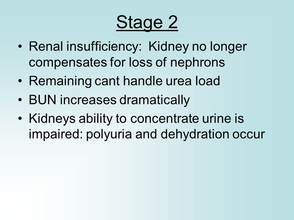Stage 2 Renal insufficiency: Kidney no longer compensates for loss of nephrons Remaining cant handle urea load BUN increases dramatically Kidneys abil