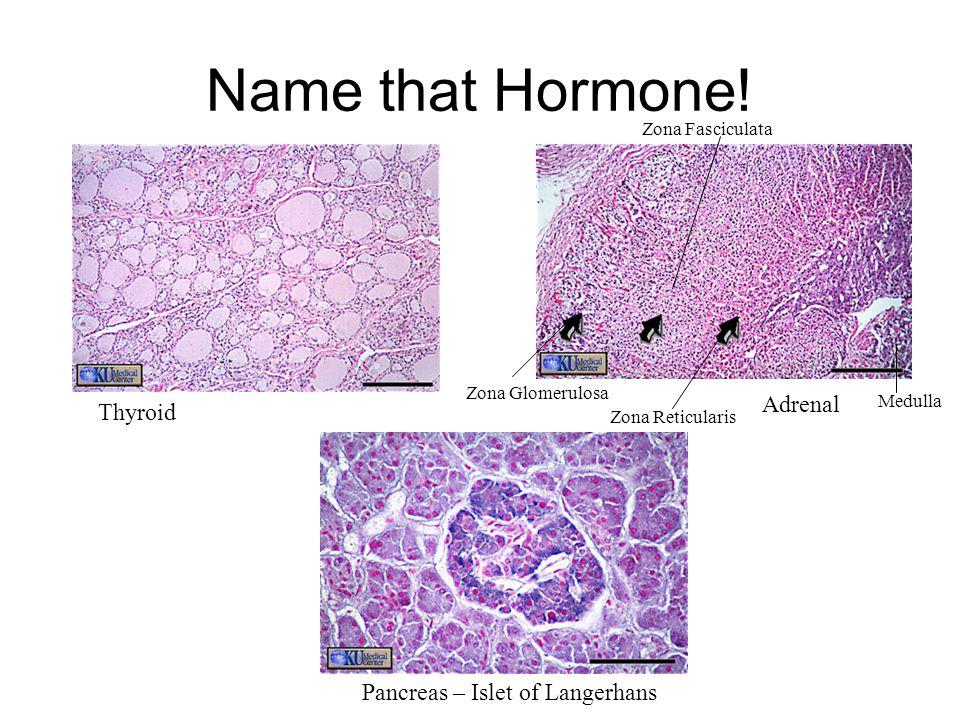 Thyroid Adrenal Pancreas – Islet of Langerhans Zona Glomerulosa Zona Fasciculata Zona Reticularis Medulla