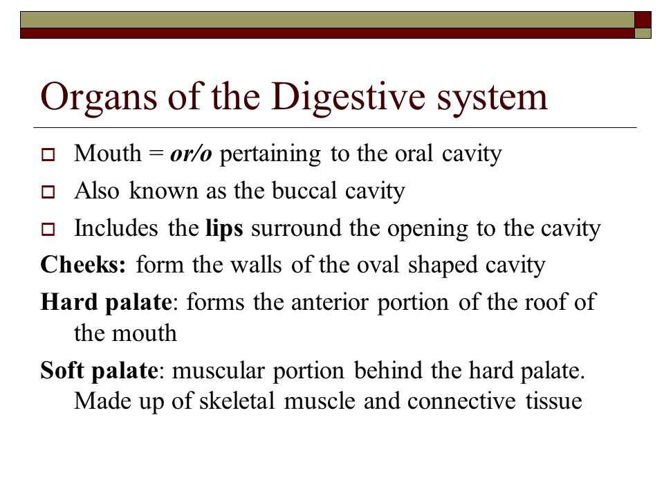Organs of the Digestive system  Mouth = or/o pertaining to the oral cavity  Also known as the buccal cavity  Includes the lips surround the opening