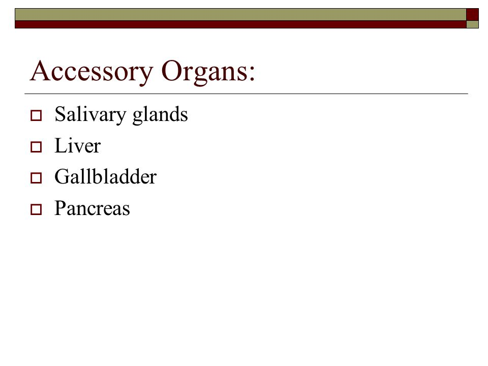 Accessory Organs:  Salivary glands  Liver  Gallbladder  Pancreas