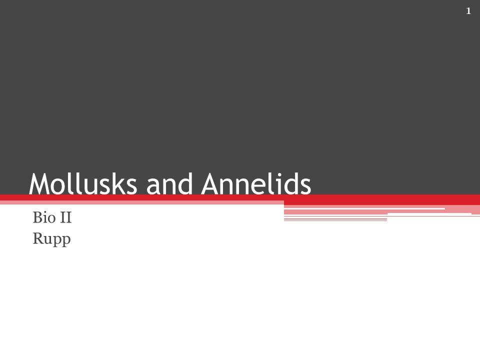 Mollusks and Annelids Bio II Rupp 1