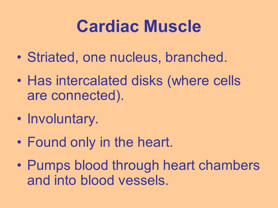 Cardiac Muscle Striated, one nucleus, branched. Has intercalated disks (where cells are connected). Involuntary. Found only in the heart. Pumps blood