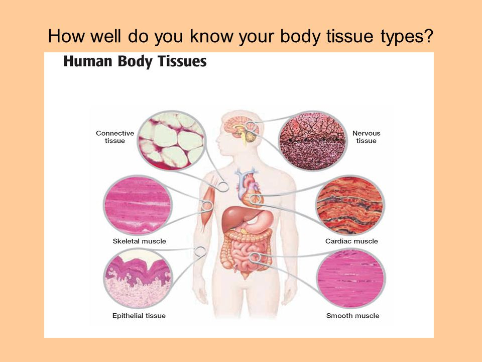 How well do you know your body tissue types?