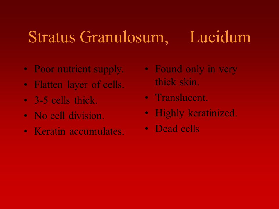 Stratus Granulosum, Lucidum Poor nutrient supply. Flatten layer of cells. 3-5 cells thick. No cell division. Keratin accumulates. Found only in very t