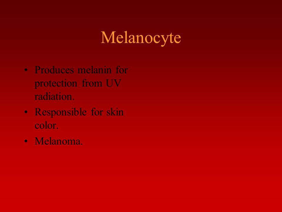 Produces melanin for protection from UV radiation. Responsible for skin color. Melanoma.