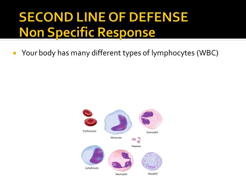  Your body has many different types of lymphocytes (WBC)