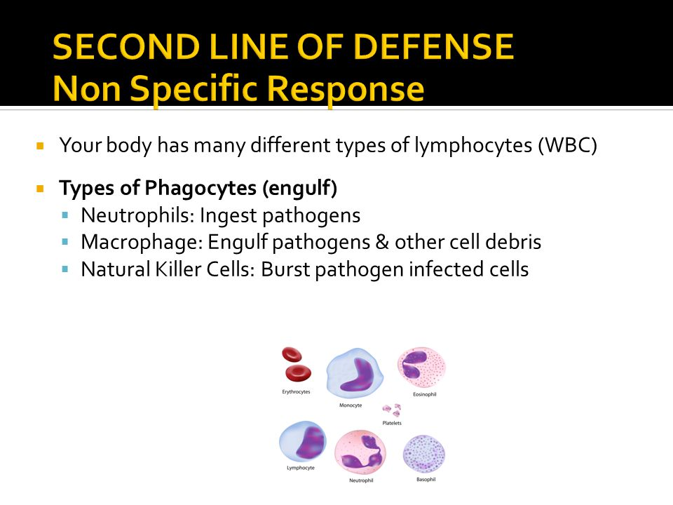  Your body has many different types of lymphocytes (WBC)  Types of Phagocytes (engulf)  Neutrophils: Ingest pathogens  Macrophage: Engulf pathogens & other cell debris  Natural Killer Cells: Burst pathogen infected cells
