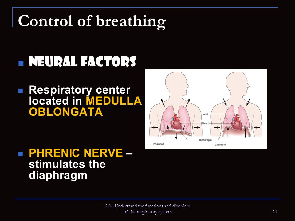 2.06 Understand the functions and disorders of the respiratory system 21 Control of breathing Neural Factors Respiratory center located in MEDULLA OBL