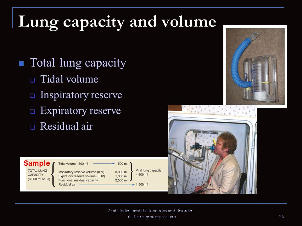 2.06 Understand the functions and disorders of the respiratory system 26 Lung capacity and volume Total lung capacity  Tidal volume  Inspiratory res