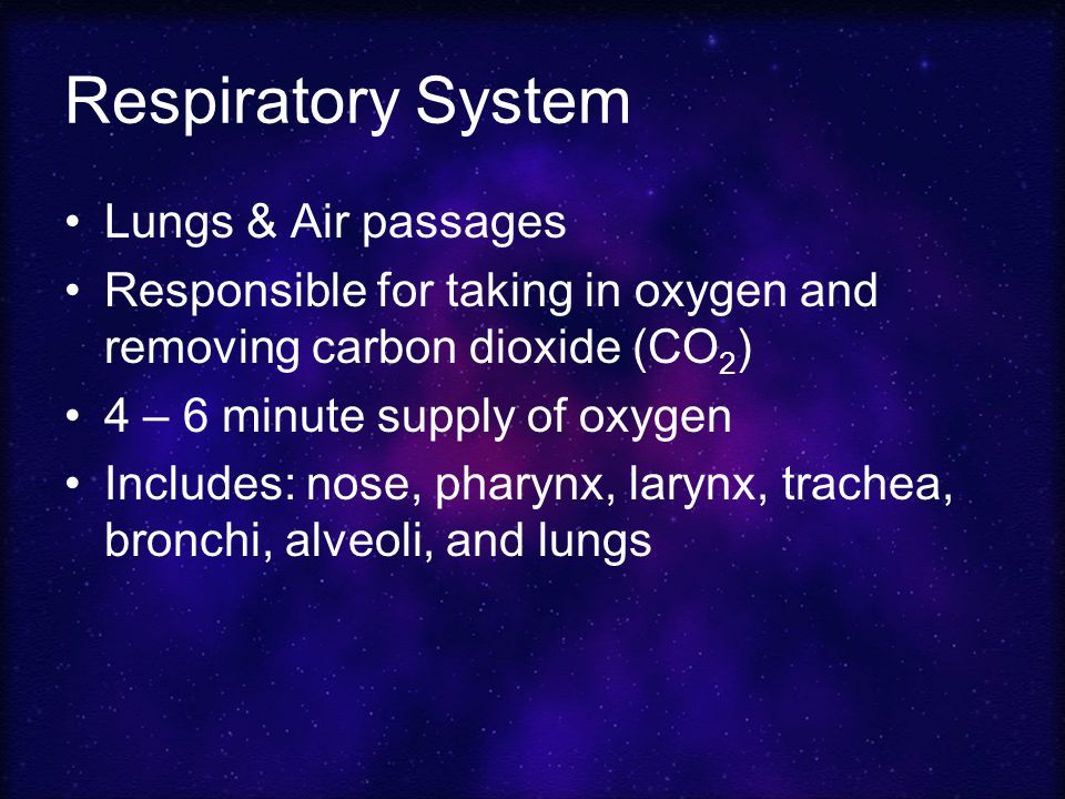 Respiratory System Lungs & Air passages Responsible for taking in oxygen and removing carbon dioxide (CO 2 ) 4 – 6 minute supply of oxygen Includes: nose, pharynx, larynx, trachea, bronchi, alveoli, and lungs