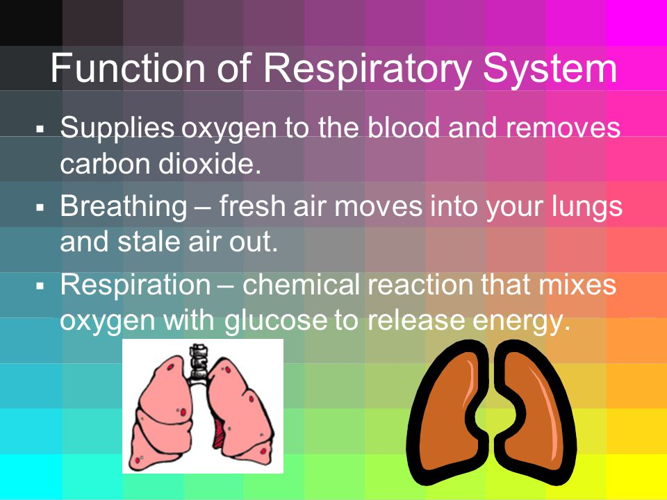 Function of Respiratory System  Supplies oxygen to the blood and removes carbon dioxide.