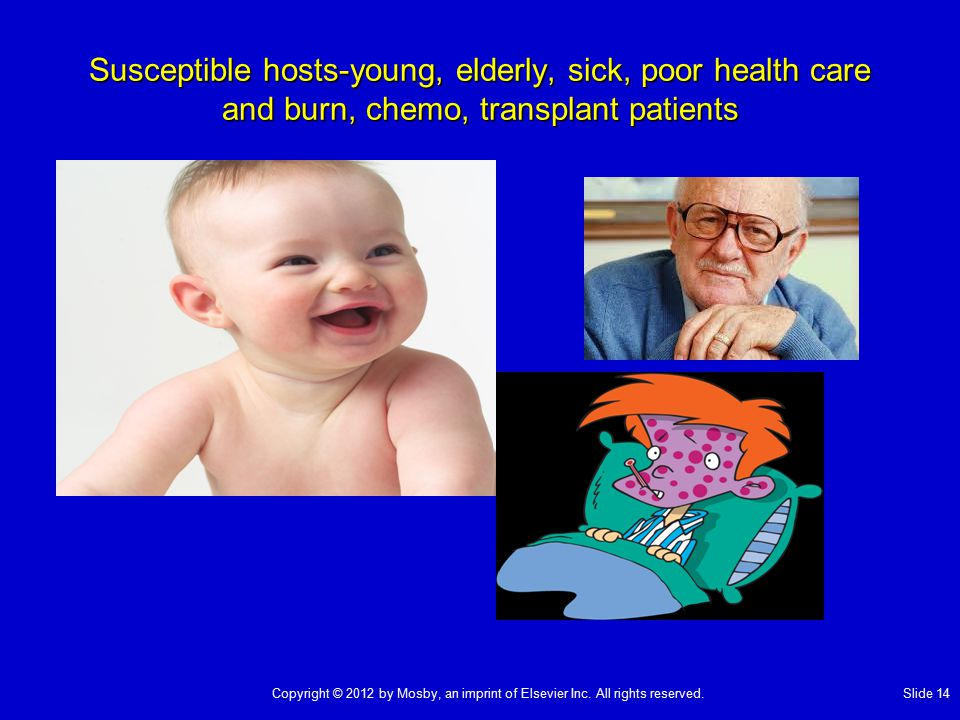 Susceptible hosts-young, elderly, sick, poor health care and burn, chemo, transplant patients Copyright © 2012 by Mosby, an imprint of Elsevier Inc. A