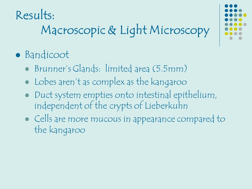 Results: Macroscopic & Light Microscopy Bandicoot Brunner's Glands: limited area (5.5mm) Lobes aren't as complex as the kangaroo Duct system empties o