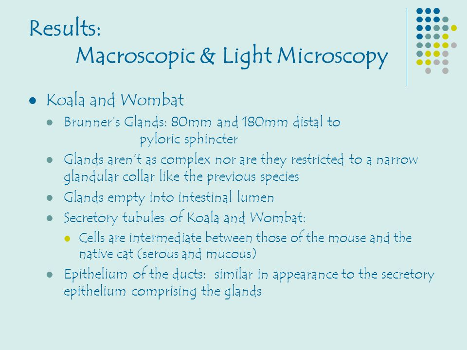 Results: Macroscopic & Light Microscopy Koala and Wombat Brunner's Glands: 80mm and 180mm distal to pyloric sphincter Glands aren't as complex nor are