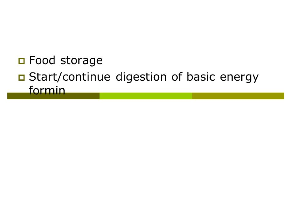 Major Functions of Stomach  Food storage  Start/continue digestion of basic energy forming nutrients