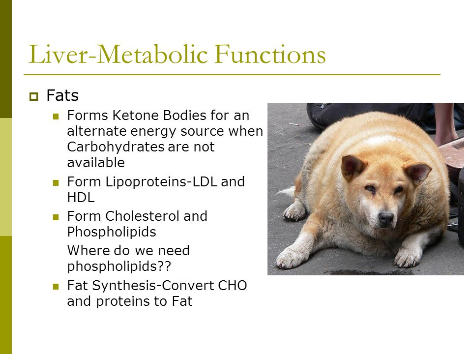 Liver-Metabolic Functions  Fats Forms Ketone Bodies for an alternate energy source when Carbohydrates are not available Form Lipoproteins-LDL and HDL Form Cholesterol and Phospholipids Where do we need phospholipids?.