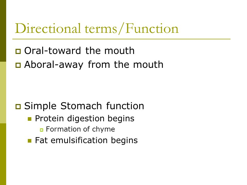 Directional terms/Function  Oral-toward the mouth  Aboral-away from the mouth  Simple Stomach function Protein digestion begins  Formation of chyme Fat emulsification begins