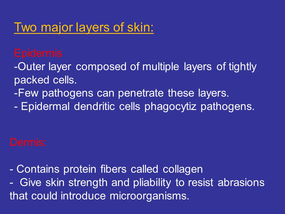 Two major layers of skin: Epidermis -Outer layer composed of multiple layers of tightly packed cells.