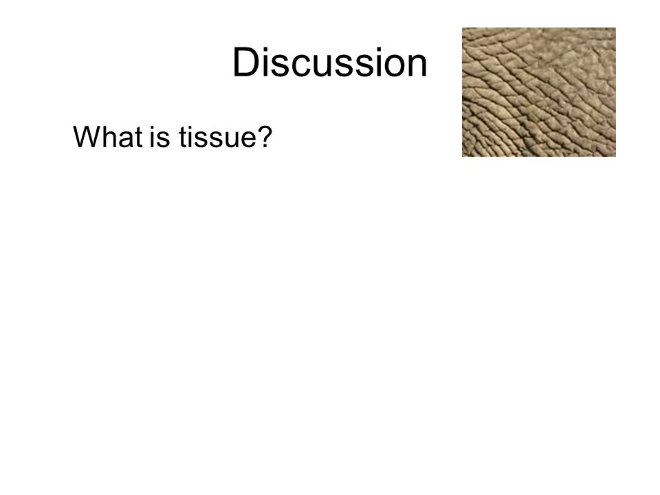 Discussion What is tissue?
